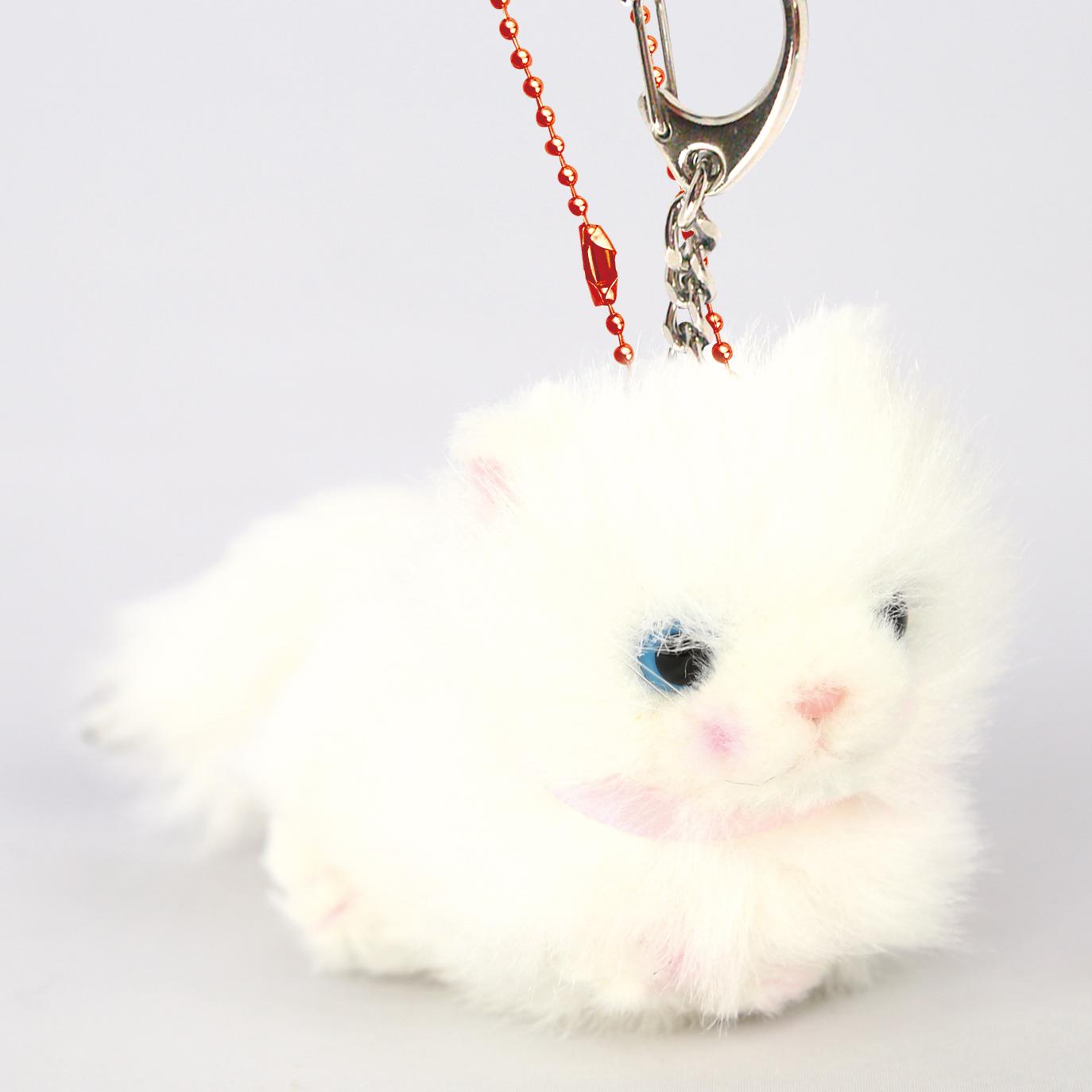 Bambino cat ペルシャネコ
