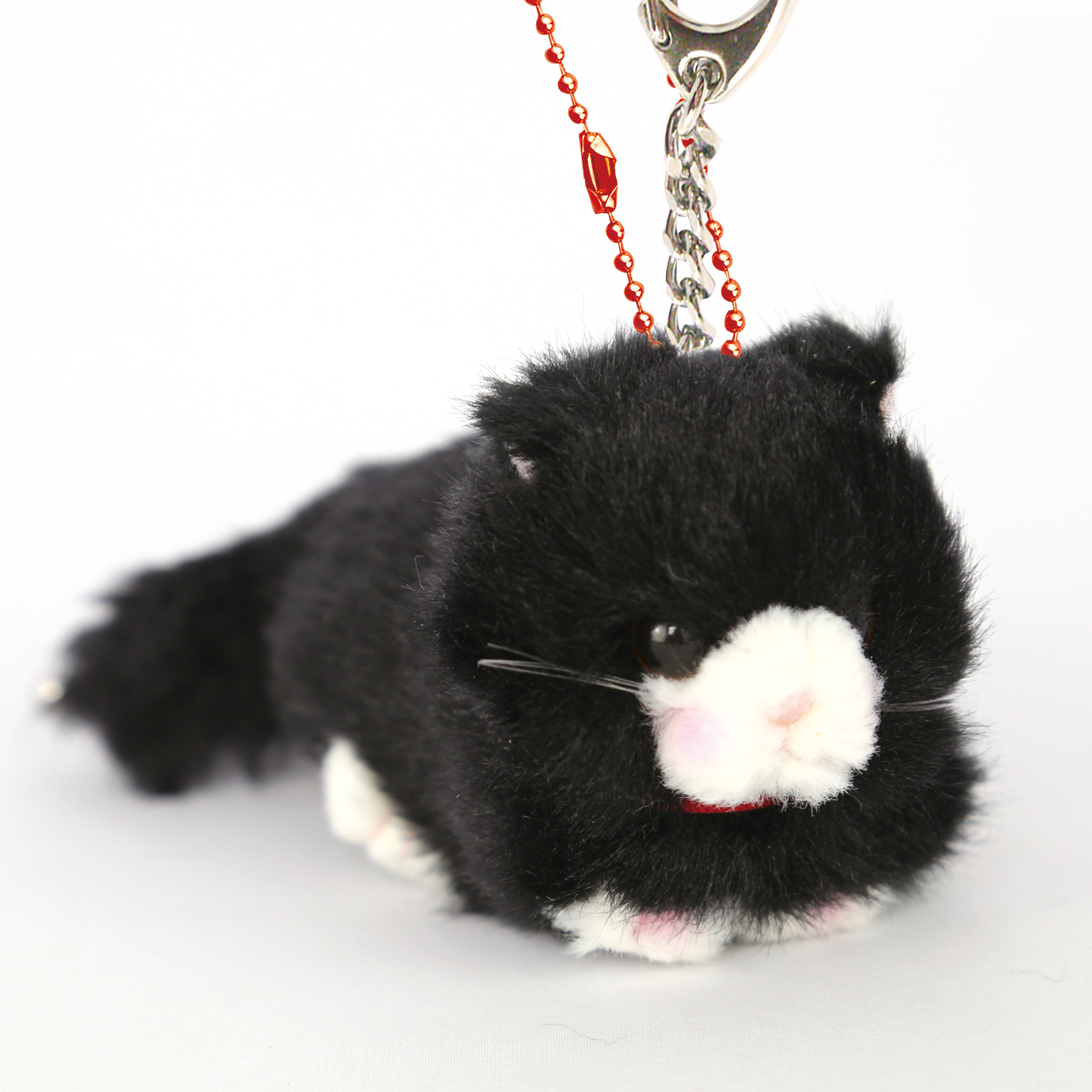 Bambino cat 黒